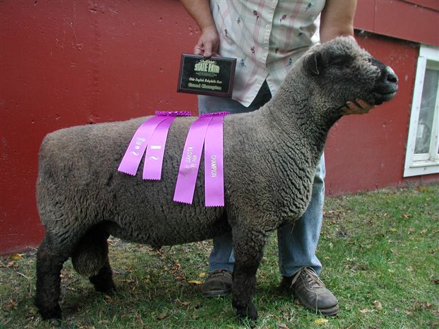 Babydoll Sheep for Sale ~ Fuller's Hamps & Downs