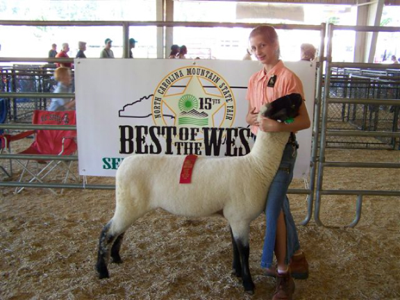 champion hampshire sheep