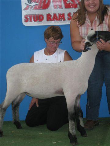 Champion Hampshire Sheep & Southdown Sheep~Fuller's Hamps